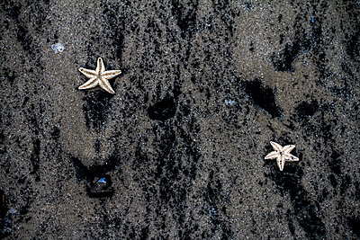 Starfish - p417m1203524 by Pat Meise