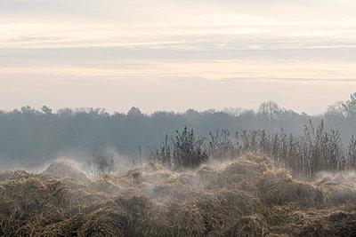 Nebel im Herbst - p739m1191019 von Baertels