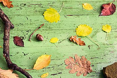 Waldblätter auf grünem Holz - p761m1190507 von Adeleida