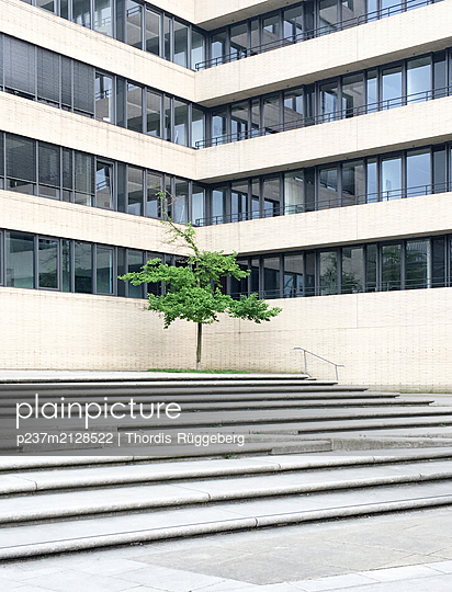 Small tree in front of a office building - p237m2128522 by Thordis Rüggeberg