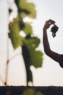 Frau hält Weintrauben in der Hand - p1150m2127045 von Elise Ortiou Campion