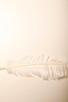 Weiße Feder - p1650859 von Andrea Schoenrock