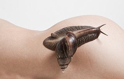 Snail on a body - p1670m2260238 by HANNAH