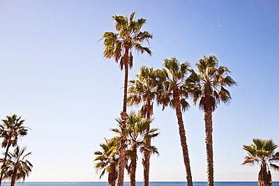 Los Angeles - p584m1026266 by ballyscanlon