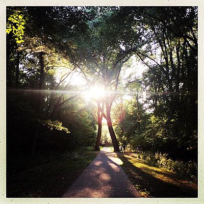 Verliebte Bäume - p1670m2253539 von HANNAH