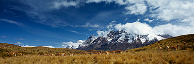 Torres del Paine - p844m1118989 von Markus Renner