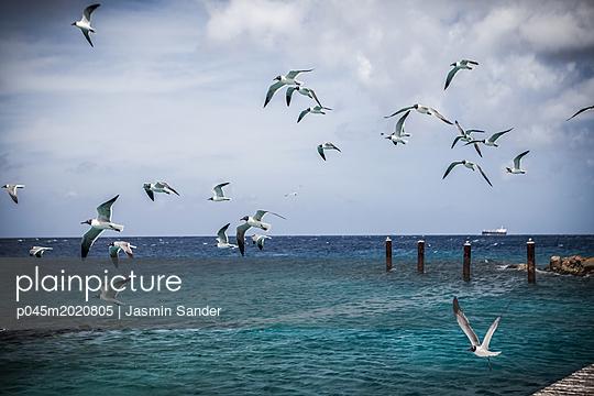 p045m2020805 by Jasmin Sander