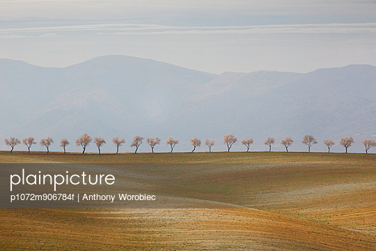 Line of Almond Trees, Almeria Province, Spain. - p1072m906784f by Anthony Worobiec
