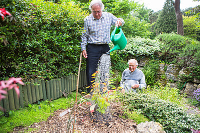 Senior man watering plants in garden - p1026m1164170 by Patrick Frost