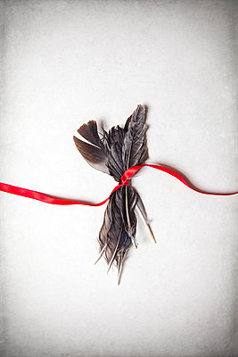 Red ribbon wrapped around feathers  - p1248m2287879 by miguel sobreira