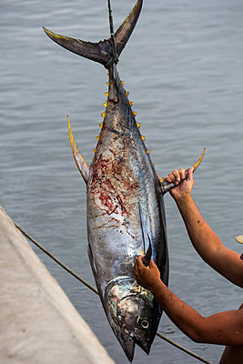 Fisch - p958m1119090 von KL23