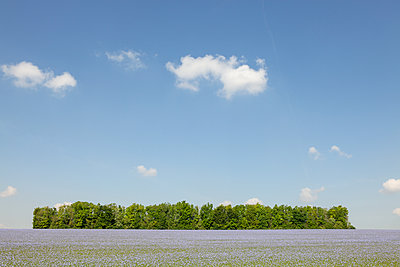 Flax field - p873m2183737 by Philip Provily