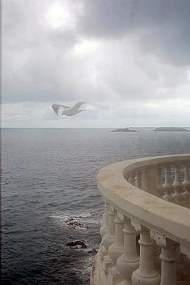 A room with a view on sea and seagull - p1307m2020357 by Agnès Deschamps