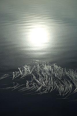 Wasserpflanzen treiben auf einem dunklem See in dem die Sonne sich spiegelt - p235m2132757 von KuS