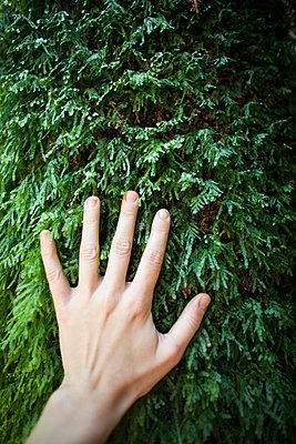 p343m909358f von Monica Donovan
