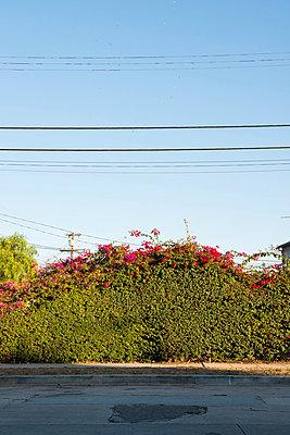 Lush foliage - p800m830714 by Emma McIntyre