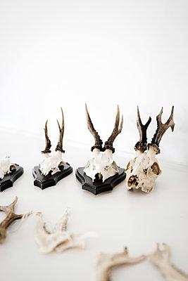 Deer antler - p1076m1492814 by TOBSN