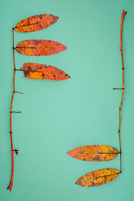 Autumn leaves - p1228m2215101 by Benjamin Harte