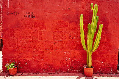 Peru, Arequipa, red wall with cactus at Santa Catalina Monastery - p300m2059390 by Stefan Schütz