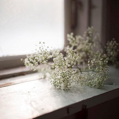 White flowers on windowsill - p312m1024604f by Eveline Johnsson