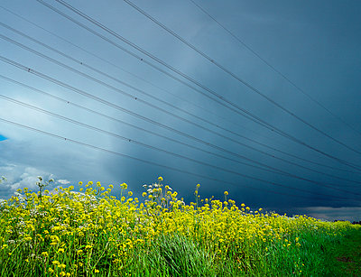 Canola field and high-tension lines - p1132m1016945 by Mischa Keijser