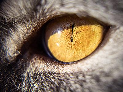 Cat's yellow eye close-up, macro - p1166m2171732 by Cavan Images