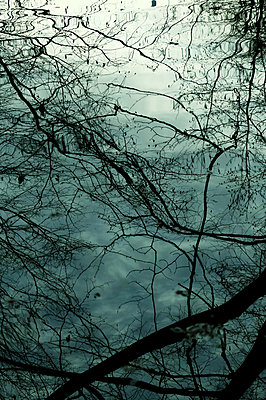 Reflection of branches on water surface - p879m2206333 by nico
