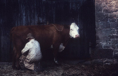 Man milking a cow - p983m662007 by Richard Dunkley