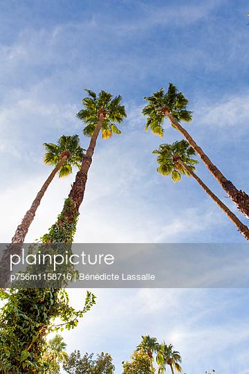 Palm Springs - p756m1158716 von Bénédicte Lassalle