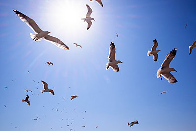 Low angle view of seagulls flying against blue sky on sunny day - p1166m1151353 by Cavan Images