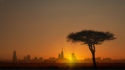 Silhouette of tree in front of city skyline at sunset in Nairobi, Kenya - p1427m2085033 by ac productions