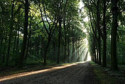 Stadtpark - p305m816477 von Dirk Morla