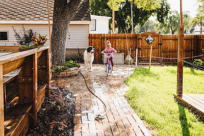 Girl rides bike through sprinkler in backyard with big dog watching - p1166m2106892 by Cavan Images