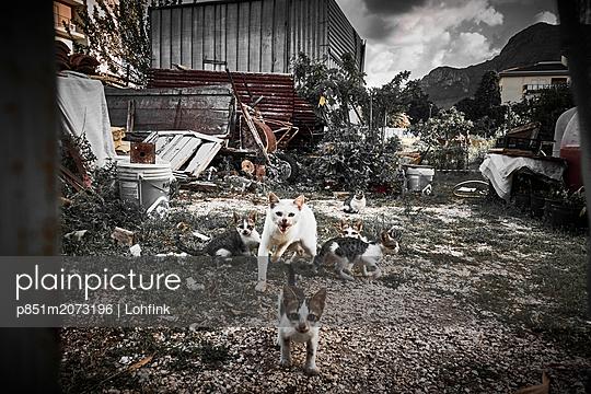 Six cats - p851m2073196 by Lohfink