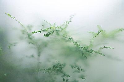 Pflanzen hinter Plexiglas - p2651247 von Oote Boe