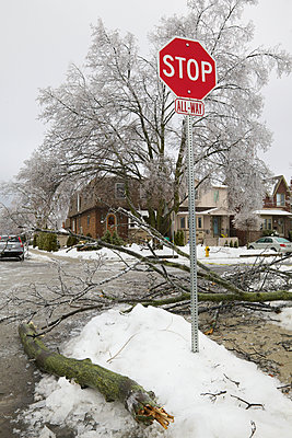 Ice storm damage in Leaside neighborhood; Toronto, Ontario, Canada - p442m1086616 by Beanstock Images