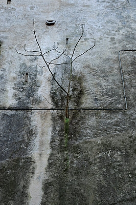 Sapling grows on concrete area - p491m1119182 by Ernesto Timor
