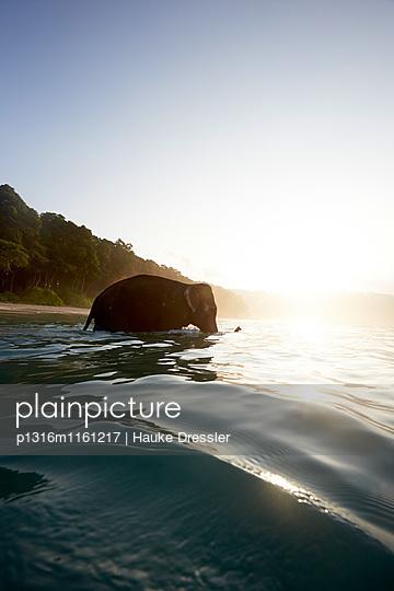Rajan geht baden,Radhanagar Beach fruehmorgens, Wald ohne Palmen, Westkueste, Havelock Island, Andaman Islands, Union Territory, India - p1316m1161217 von Hauke Dressler