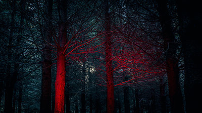 Dark Forest - p1487m1564184 by Ludovic Mornand