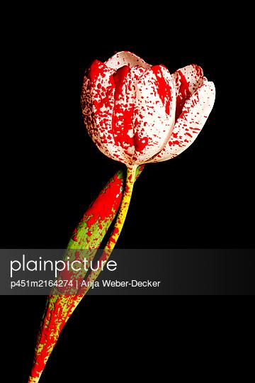 p451m2164274 by Anja Weber-Decker