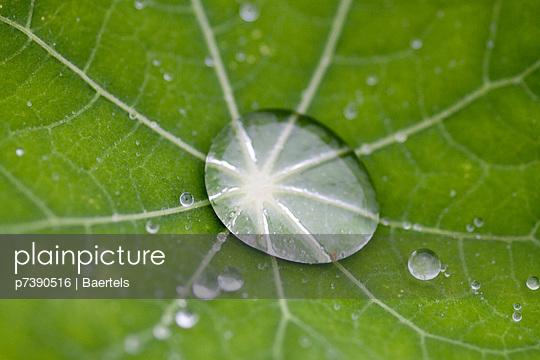 Lotuseffekt - p7390516 von Baertels