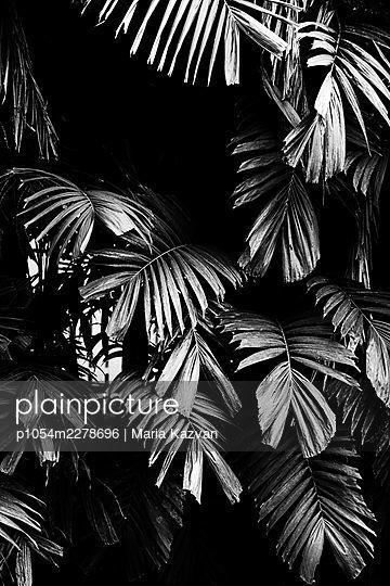 Tropical leaves - p1054m2278696 by Maria Kazvan