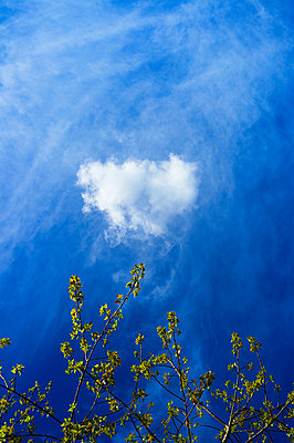Trees and blue sky with some clouds - p1096m1424790 by Rajkumar Singh