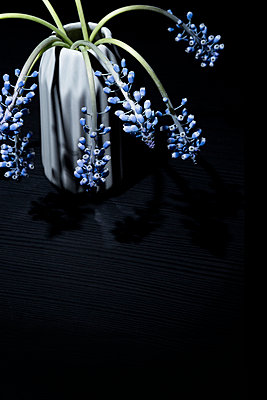 Hyacinths - p1149m1208343 by Yvonne Röder