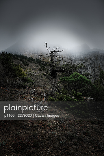 Foggy Mountain View With Dead Juniper Tree - p1166m2279323 by Cavan Images