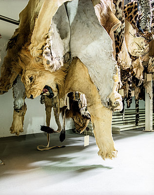 Natural History Museum - p1205m1065980 by Klaus Pichler