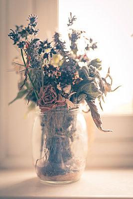 Trockenblumen in einer Glasvase auf der Fensterbank - p1433m1538689 von Wolf Kettler