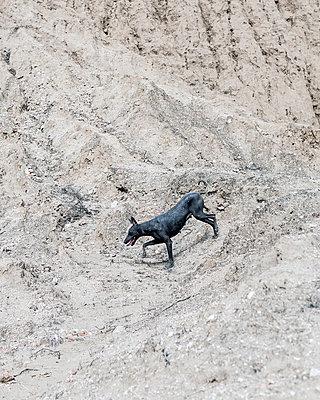 Ein Straßenhund in der Wüste, Peru - p1542m2173323 von Roger Grasas