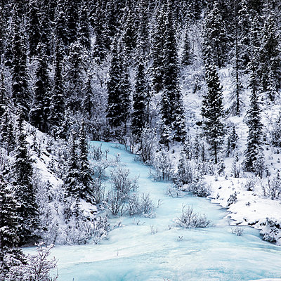 Snow covered pine forest and frozen water in winter in the Rocky mountains; British Columbia, Canada - p442m1216428 by Keith Levit