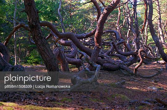 p858m1508339 by Lucja Romanowska